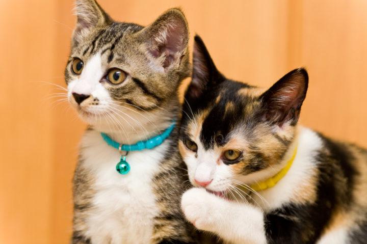 多頭飼い猫のおすすめキャットフードは?注意点やおさえておきたいポイント