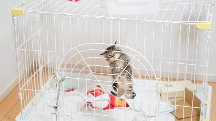 避妊去勢後の子猫のフード