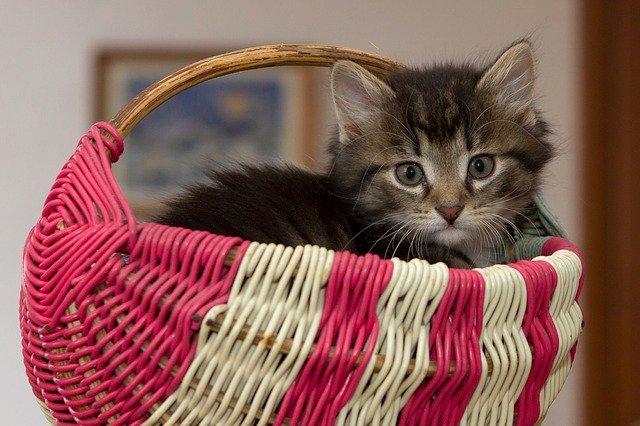 2か月子猫ご飯