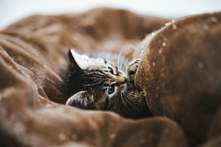 子猫ドライフード消化できない
